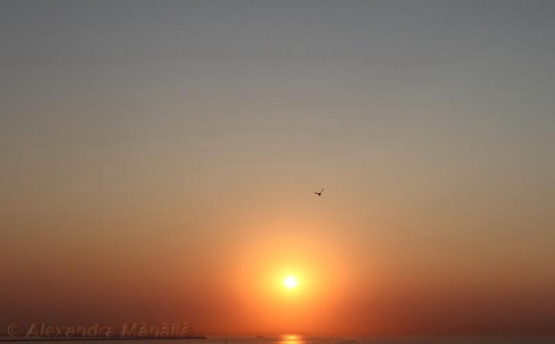 2015-07-10-rasaritul-Eforie.Nord_ copyright_Alexandra Manaila - alexandramanaila.ro_003